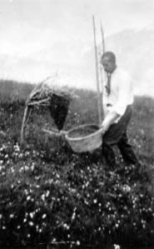 Alois Knoll, geb. 1892, beim Einfangen eines Bienenschwarmes